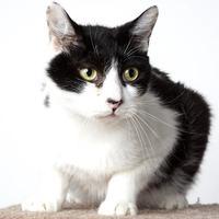 Adopt A Pet :: Martin @Petsmart - Reno, NV