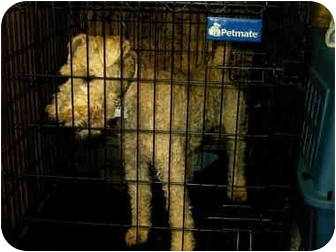 Fox Terrier (Wirehaired) Dog for adoption in Baltimore, Maryland - Zip