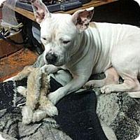 Adopt A Pet :: Ally, LOVES kids! - Sacramento, CA
