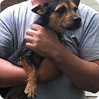 Adopt A Pet :: Brandon - Shirley, NY