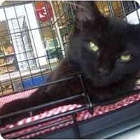 Adopt A Pet :: Joy - Easley, SC
