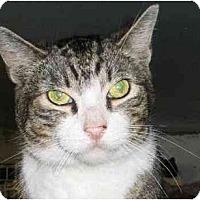 Adopt A Pet :: Sam Adams - Jamaica, NY
