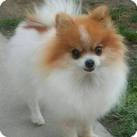 Adopt A Pet :: Patti - Orange, CA