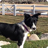 Adopt A Pet :: Cass - Salt Lake City, UT