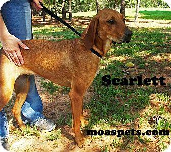 Coonhound Mix Dog for adoption in Danielsville, Georgia - Scarlett