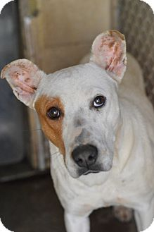 Pit Bull Terrier Mix Dog for adoption in Henderson, North Carolina - Diamond