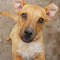 Adopt A Pet :: Pandy - Pipe Creek, TX