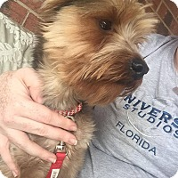 Adopt A Pet :: Jo Jo - Adoption Pending! - Croydon, NH