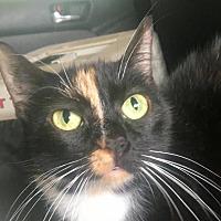 Adopt A Pet :: Alice - Waggaman, LA