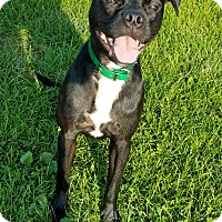 Adopt A Pet :: Prince/Percy - DeForest, WI