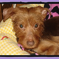 Adopt A Pet :: Rusty - Newfield, NJ