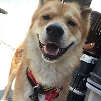 Adopt A Pet :: Crash - Ventura, CA