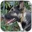 Photo 3 - German Shepherd Dog Mix Dog for adoption in Los Angeles, California - Kota von Kastl