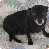 Adopt A Pet :: Raisen - N. Fort Myers, FL
