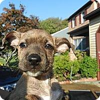 Adopt A Pet :: Sara - South Jersey, NJ