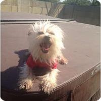 Adopt A Pet :: Squeak - Oceanside, CA