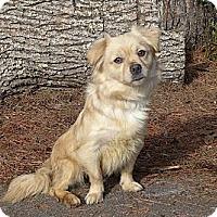 Adopt A Pet :: Layla - Mocksville, NC