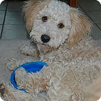 Adopt A Pet :: NIKKI - Mission Viejo, CA