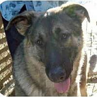 Adopt A Pet :: Sasha - kennebunkport, ME