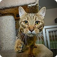 Adopt A Pet :: Tupelo Honey - New York, NY