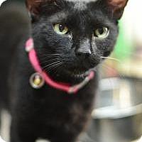 Adopt A Pet :: Giselle - New Orleans, LA