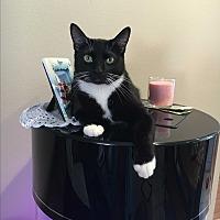 Adopt A Pet :: Winky - Nuevo, CA