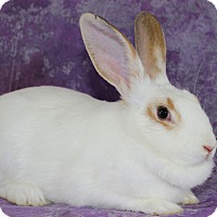 Adopt A Pet :: Bun-Bun - Wilmington, NC