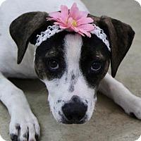 Adopt A Pet :: Elsa - Picayune, MS