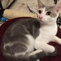 Adopt A Pet :: Dixon - Herndon, VA