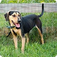 Adopt A Pet :: LIBBY-FOSTER NEEDED - richmond, VA