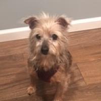 Adopt A Pet :: Ziva - N. Babylon, NY
