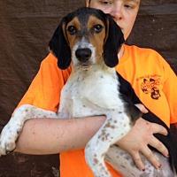 Adopt A Pet :: Tramp - Groveland, FL