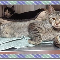 Adopt A Pet :: MIMI SEE ALSO DUKE - Marietta, GA