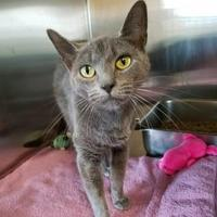 Adopt A Pet :: Stork - Chambersburg, PA