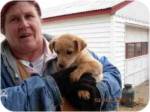 Terrier (Unknown Type, Small) Mix Puppy for adoption in Lexington, Missouri - Sandy