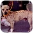Photo 2 - Chihuahua Mix Dog for adoption in Old Bridge, New Jersey - Baxter
