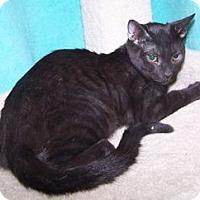 Adopt A Pet :: Solomon - Colorado Springs, CO