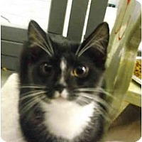 Adopt A Pet :: Crosby - Mission, BC
