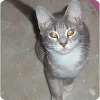 Adopt A Pet :: Kitten3 - Orlando, FL