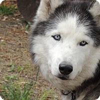 Adopt A Pet :: Klondike - Horsham, PA