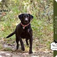 Adopt A Pet :: Maddie - Lewisville, IN