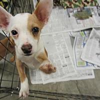 Adopt A Pet :: Clark - Fresno, CA