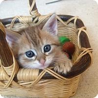 Adopt A Pet :: Hazel - Xenia, OH