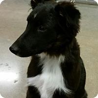 Adopt A Pet :: Max - 5 months old - Phoenix, AZ