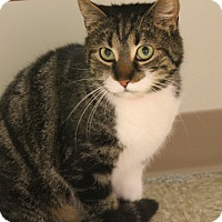 Adopt A Pet :: Hildie - Medina, OH