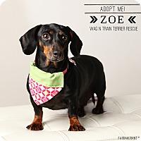 Adopt A Pet :: Zoe - Omaha, NE