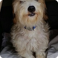Adopt A Pet :: Sky - Buchanan Dam, TX