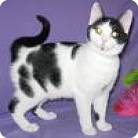Adopt A Pet :: Rini - Powell, OH