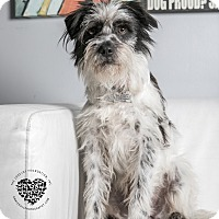 Adopt A Pet :: Patches - Inglewood, CA