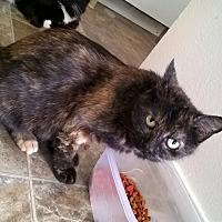 Adopt A Pet :: Karma - Yuba City, CA